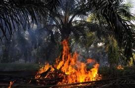 Kebakaran hutan Riau  :  Sumber Air Kering, Pemadaman Makin Sulit