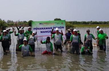 Bekasi Fajar Tanam 13.000 Pohon Mangrove