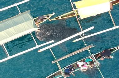 Seekor Ikan Hiu Tutul Terdampar di Parangkusumo