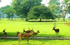 Penataan Kawasan Kebun Raya Dilanjutkan