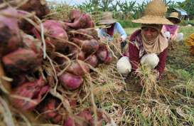 Produk Hortikultura Dorong NTP Petani Naik 0,89%