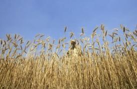 Presiden Argentina Naikkan Pajak Ekspor Pertanian, Petani Berpotensi Tunda Penjualan