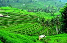 Desa Jatiluwih Populerkan Beras Merah dan Kerajinan Bambu