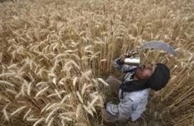 Mesir Berencana Hedging Harga Gandum setelah Harga Melonjak
