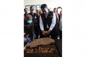 Bali Ekspor Perdana 17.340 Ekor Bibit Ayam Petelur