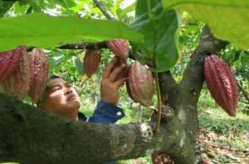 Jembrana Targetkan 10 Subak Kakao Peroleh Sertifikasi…
