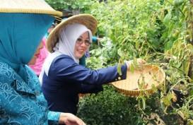 99% Ibu di Indonesia Menjadi Penentu Belanja Rumah Tangga