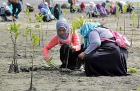 Kemenko Maritim Canangkan Percepatan Rehabilitasi Mangrove