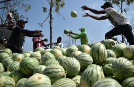 Pemkot Padang Kembangkan Wisata Agro di Pasar Raya