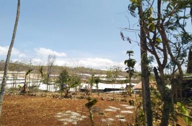 Ratusan Karyawan Peternakan Ayam WMU Dirumahkan