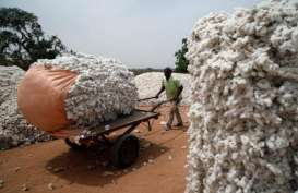 Hujan Tak Menentu Bikin Produksi Kapas India Merosot