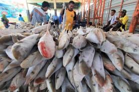 Terpengaruh Cuaca, Pendapatan Penjualan Ikan di Kendari…