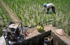 Lahan Pertanian di Palembang Susut 10%