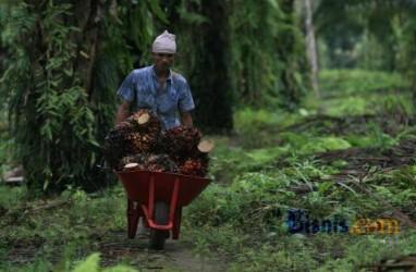 Hasilkan Rp307 Triliun, Kementan Ingin Replanting Sawit Sukses