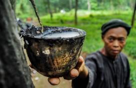 Petani Karet Kaltim Diminta Tak Jual Hasil Produksi ke Tengkulak