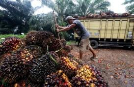 Kebun Petani Sawit Swadaya yang Dievaluasi Diperkirakan Hanya 10%