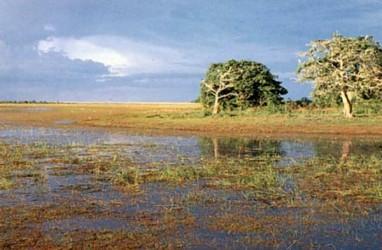 Indo Acid Tama Kembangkan Pupuk untuk Lahan Sub-Optimal