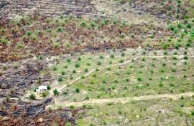 Peremajaan Perkebunan Sawit Rakyat di Sumut Masih Minim