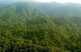 Laju Deforestasi Indonesia Mulai Melambat