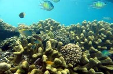 Komitmen Presiden 2019, Pandu Laut Nusantara Luncurkan Petisi Perlindungan Laut