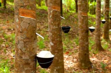Konversi Kebun Rakyat Ancam Pabrik Karet di Sumut