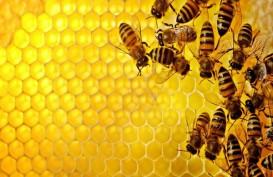 Diserang Lebah Madu Raksasa 4 Warga Wonogiri Dilarikan ke Rumah Sakit