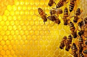 Diserang Lebah Madu Raksasa 4 Warga Wonogiri Dilarikan…