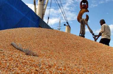 Jateng Mengklaim Tidak Memerlukan Jagung Impor