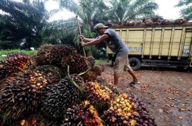 Ekspansi Pabrik Sawit Dorong Kredit Investasi BRI Agro