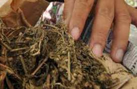 Pelajar SMA Jemput Narkoba di Perusahaan Jasa Pengiriman Barang. Polisi Amankan 75 Paket Ganja
