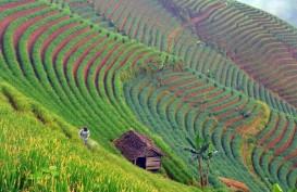 """Paket Kebijakan Ekonomi XIV: Sektor Agribisnis dan Ekonomi Digital Dapat Fasilitas """"Tax Holiday"""""""