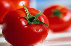 "13 Makanan Bikin Otak ""Encer"" dan Sehat"