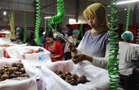 Ekspor Manggis Bali ke China Meningkat 60%
