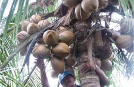 KOMODITAS ANDALAN : Daerah Dorong Industrialisasi Kelapa