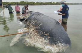 KLHK: Sampah di Laut Sebagian Besar Dari Daratan
