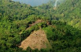 Dana Lingkungan Hidup Diprioritas untuk Pemulihan Pohon