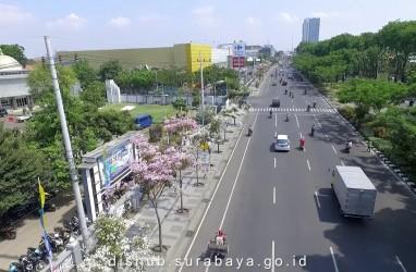 Sensasi Bunga Sakura di Surabaya. Mekar Oktober-November, Rontok Desember