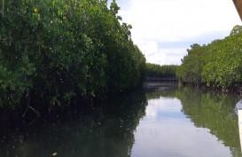 Mangrove Pembelah Pasi-Gusung Jadi Destinasi Wisata Selayar