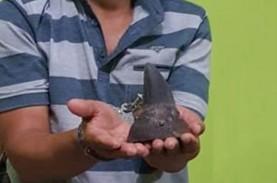 Polda Lampung Amankan 2 Pelaku Penjualan Cula Badak