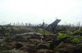 Luas Lahan Kritis di NTT Capai 2 Juta Hektare