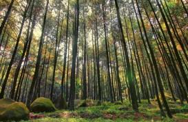 6.324 Hektare Beralih dari Milik Negara ke Hutan Adat