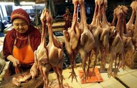 Pedagang di Nunukan Terpaksa Datangkan Daging Ayam dari Malaysia