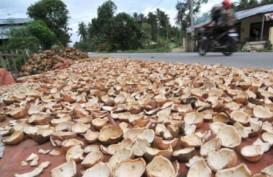 Harga Kopra Anjlok, Petani Malut Disarankan Tanam Hortikultura