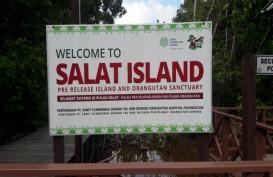 Jadi Persinggahan Orangutan, Pulau Salat Siap Dikembangkan Sebagai Kawasan Ekowisata