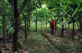 Anggaran untuk Kakao & Kelapa Dipangkas, Karet Ditambah