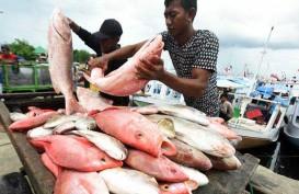 Akibat Cuaca Buruk, Harga Ikan Tenggiri Naik 83 Persen, Cumi-Cumi 129 Persen di Pangkalpinang