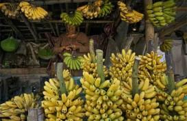 Pisang Ambon Curup Diklaim Terbaik Se-Indonesia