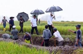 Pemerintah Sudah Merehabilitasi Irigasi Primer Tiga Juta Hektare