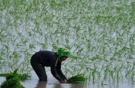 Nilai Tukar Petani di Lampung Naik 0,26%