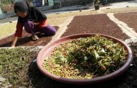 Harga Cengkih di Ambon Turun Rp2.000 per Kilogram